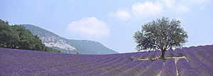 provence uitsnede